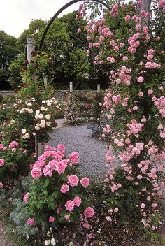 Mottisfont Abbey Rose Garden, Hampshire, England | An awesome rose garden| Pink climbing roses