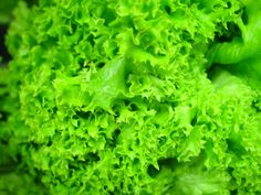 Lettuce contain the sedative lactucarium which relaxes the nerves without impairing digestion. As a general rule, the darker green the leaves, the more nutritious the salad green. For example, romaine or watercress have seven to eight times as much beta-carotene, and two to four times the calcium, and twice the amount of potassium as iceberg lettuce. By varying the greens in your salads, you can enhance the nutritional content as well as vary the tastes and textures.