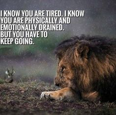 89 Great Inspirational Quotes & Motivational Words To Keep You Inspired - Page 5 of 13 - BoomSumo Quotes Inspirational Quotes About Success, Good Morning Inspirational Quotes, Motivational Quotes For Success, Good Morning Quotes, Positive Quotes, Quotes Motivation, Lion Motivation, Hustle Quotes, Happy Morning
