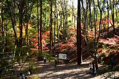 市川市・大町公園の紅葉 Autumn Leaves in Omachi Park Ichikawa city,Chiba,Japan