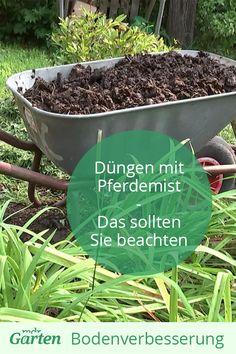 Pferdemist ist super Langzeitdünger. Den Dung können Sie für Rosen, Obstgehölze und im Gemüsebeet verwenden. Mdr Garten, Super, Plants, Horse Manure, Planting Vegetables, Allotment, Garden Care, Donkey, Composters