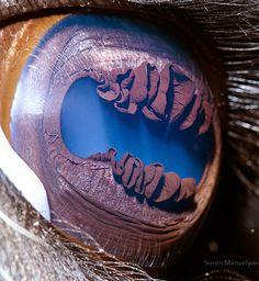 Extreme Close-Up Photos of Animal Eyes by Suren Manvelyan  llama
