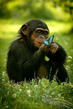 "Miks' Pics ""Animals V"" board @ http://www.pinterest.com/msmgish/animals-v/"