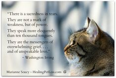 Loss Of Cat Prayer Cat S Prayer For Grieving Humans I Believe In Cat Heaven I Believe