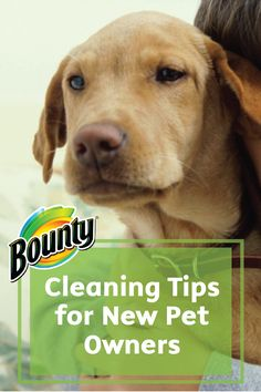 Welcoming a four-legged friend into your family is quite an exciting occasion. The messy surprises that come with—not so much. Keep Bounty Paper Towels stocked in your home to help tackle these Cleaning Tips for New Pet Owners.