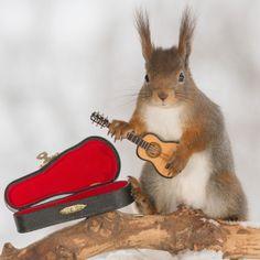 """#Squirrel  """" Musical  """"! ;-)))))"""