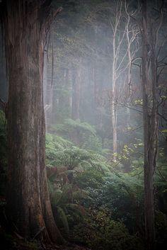 Dandenong Ranges, Australia Australia Landscape Få mere information på vores websted Melbourne Australia, Australia Travel, Beautiful World, Beautiful Places, Australia Landscape, Land Of Oz, Tree Forest, Victoria Australia, Australian Shepherd