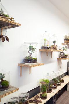 Jardiner urbain |MilK decoration
