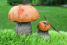 Mushroom Fungi, Outdoor Gardens, Stuffed Mushrooms, Coconut, Homemade, Fruit, Cool Stuff, Flowers, Gardening