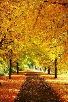 Autumn's Days by Squirrelondope.deviantart.com on @deviantART