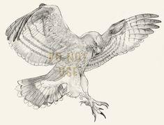 Hawk Flash, Full Back by glowcat on DeviantArt Grey Ink Tattoos, Body Art Tattoos, Crow Tattoos, Ear Tattoos, Bird Drawings, Tattoo Drawings, Eagle Chest Tattoo, Tattoo Eagle, Bird Of Prey Tattoo