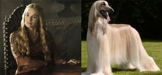 """Cersei Lannister 