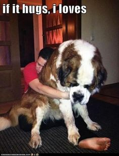 Huge dog alert!! Holly cow that dog is huge its probs bigger than a grown man he/she should be in the Guinness world record book for biggest dog in the world!