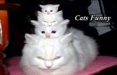 A pyramid of cats