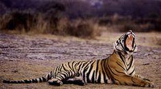Wildlife Tour Packages | India Wildlife Tour | Wildlife Sanctuary in India