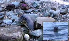 Seal swims to freedom after being saved from choking in an illegal net