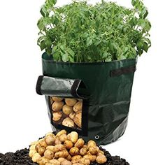 Amazon.com : ASOON 2-Pack 7 Gallon Garden Potato Grow Bag ...