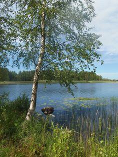 Evijärvi