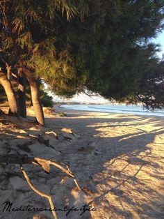Guida alla scoperta di Maiorca in inverno | Med Style