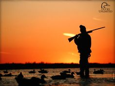 Duck Hunting Wallpapers