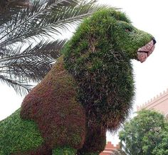 can't get enough of topiary art (in case you hadn't noticed!)