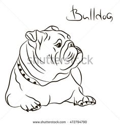 Dog breed English bulldog portrait profile