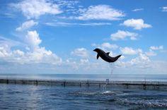 Road trip to Keys: Dolphin Research Center, Marathon