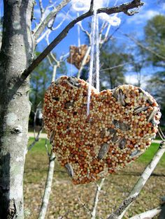 Birdseed Biscuits. Hang from your trees to feed birds during the winter months. Great kid-friendly craft too!