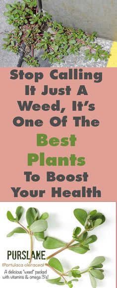 STOP CALLING IT JUST A WEED, IT'S ONE OF THE BEST PLANTS TO BOOST YOUR HEALTH
