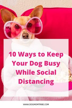 Is your dog going stir crazy during quarantine? Check out our top ideas for ways to keep your dog busy! Dog Enrichment, Dog Puzzles, Interactive Dog Toys, Foster Dog, Dog Games, Dog Safety, Dog Activities, Dog Signs, Dog Park