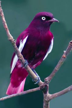 Find and save ideas about Colorful birds, Pretty birds, Beautiful birds and Tropical birds. Kinds Of Birds, All Birds, Love Birds, Angry Birds, Pretty Birds, Beautiful Birds, Animals Beautiful, Exotic Birds, Colorful Birds