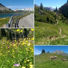 Gipslöcher, Bergseen, Bergbewohner und Bergpflanzen - Natur pur hier am Arlberg!  #wandern #lech #oberlech #bergseen #gipslöcher #blumenwiesen #naturpur