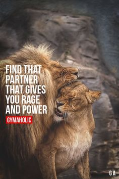 Gymaholic motivation to help you achieve your health and fitness goals. Try our free Gymaholic Fitness Workouts App. Lion Quotes, Me Quotes, Motivational Quotes, Inspirational Quotes, Qoutes, Jessy James, Lion Love, Gym Quote, Gymaholic