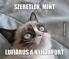 Funny shit and cute animals. Funny Cats, Funny Animals, Funny Jokes, Cute Animals, Hilarious, Grumpy Cat Humor, Cat Memes, Grumpy Cats, Angry Cat