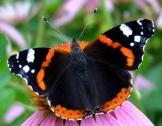 Butterflies, beetles, insects, macro, photos, nature, bugs, insectos, science, papillion, photography, amazing, forest, animals