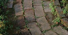 Vervelend hé, die groene blaadjes en stukjes mos tussen je terrastegels. Het maakt je terras er niet mooier op. Gelukkig hebben wij een hele goede tip voor het verwijderen van onkruid en mos. Onkruid tussen...