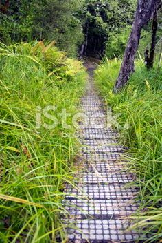 A boardwalk surrounded by flax, beech trees, and native ferns, leads. Wooden Path, Beech Tree, Photography For Sale, Image Now, Pathways, Lakes, National Parks, Royalty Free Stock Photos, World