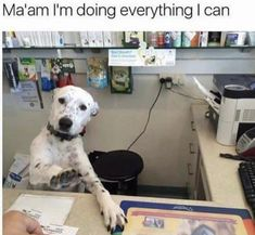 Scroll through these hilarious dog memes when you need a pick-me-up. These funny pets have gone viral thanks to their sheer cuteness. Just try not to smile looking at these adorable photos and jokes. Funny Dog Memes, Funny Animal Memes, Cute Funny Animals, Funny Animal Pictures, Cat Memes, Funny Dogs, Funniest Animals, Funniest Pictures, Cute Jokes