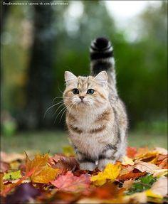 kitten in leaves