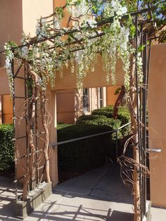 Trellis Design: tree trellis Tree Rental For Weddings Events Artificial Plants Faux Trees Tree Trellis Search System trellis tree diagram tree trellis search tree trellis crossword clue tree trellis with pot holders tree trellis system Wisteria Trellis, Wisteria Pruning, Wisteria Tree, White Wisteria, Wedding Trellis, Wisteria Wedding, White Trellis, Garden Arches, Trellis Design