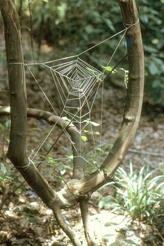 Knotted Spider Web by George Brett  | Flickr - Photo Sharing!