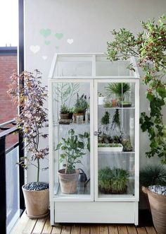 Lovely patio greenhouse. I love these glass cabinet greenhouses!