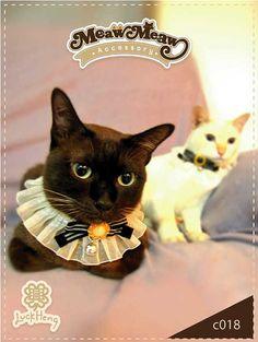 60440436dbc40 Cat Collar Fancy · Moños Para PerrosRopa ...