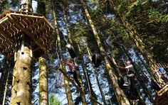 The High Ropes course at Bluestone