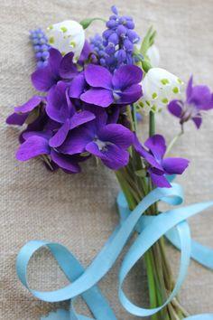 Early Spring Violets   Snowflake (or Leucojum Vernum)   grape hyacinth