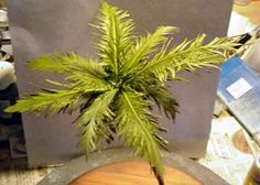 DIY REALISTIC Palm Trees for Decor!