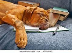 study hard my friend, study hard.