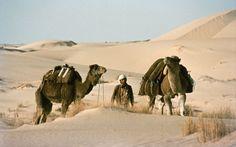 Kamele sind die ultimativen Wüstentiere Manfred, Deserts, Mood, Animals, Camels, Travel Report, Viajes, Animales, Animaux