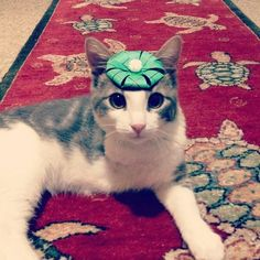 cute funny cats with tiny hats