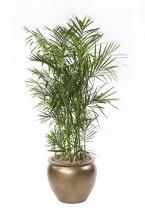 jewish new year trees tu bishvat